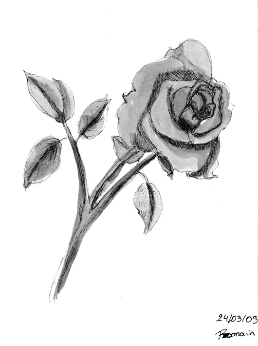 Rose Song Les Machins