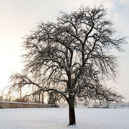 20101220_arbre_neige