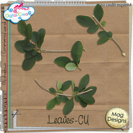 magdesigns_leaves_CU_pv2