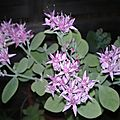 plante grasse (5)