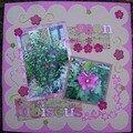 mon hibiscus