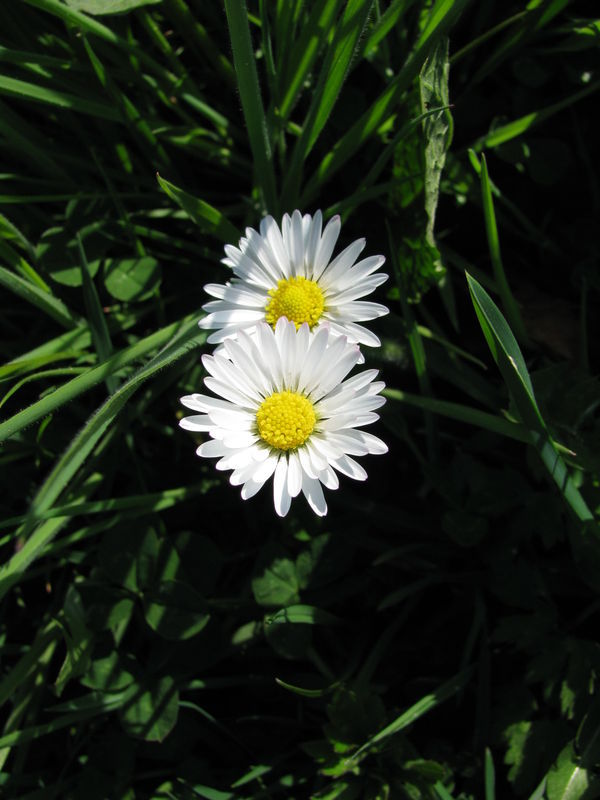 Semaine Thematique Une Petite Fleur Qui A Tout D Une Grande