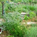 Vues du jardin