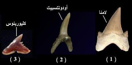 dents_de_rockin