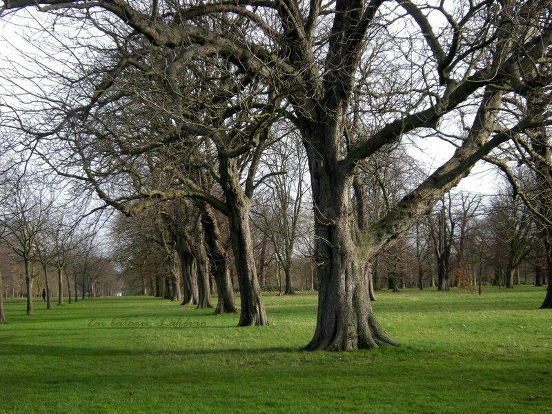 london kensington gardens trees