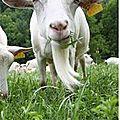 Chèvre ferme Albignac Bio Berre l'Etang