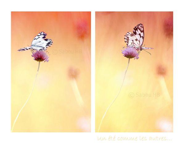 Papillon + étole