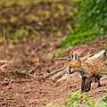 2014-05-30 LUX-1036