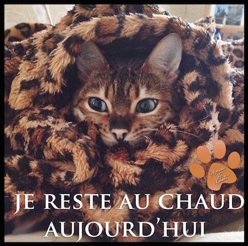 chat reste au chaud