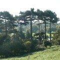 Irlande/leinster - les parcs de dublin: phoenix park