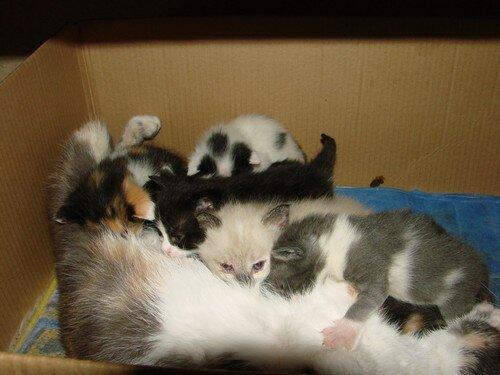 2008 04 05 Les chatons qui tètent Papillon