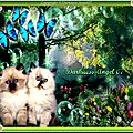 Amour de chatons
