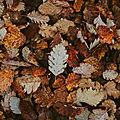 L'automne '20 d'helisa, 11e inscrite
