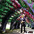 16-des-plus-belles-ruelles-et-allees-fleuries-au-monde5