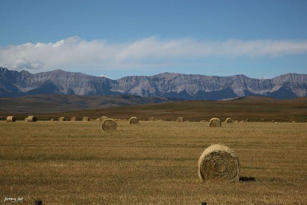 plaines et rocheuses de l'Alberta