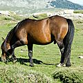 034 Cheval