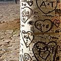 coeur arbre_8313