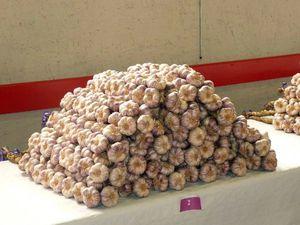 Saint Clar 2011-concours ail-15