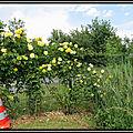 Parc floral à bordeaux : la roserai