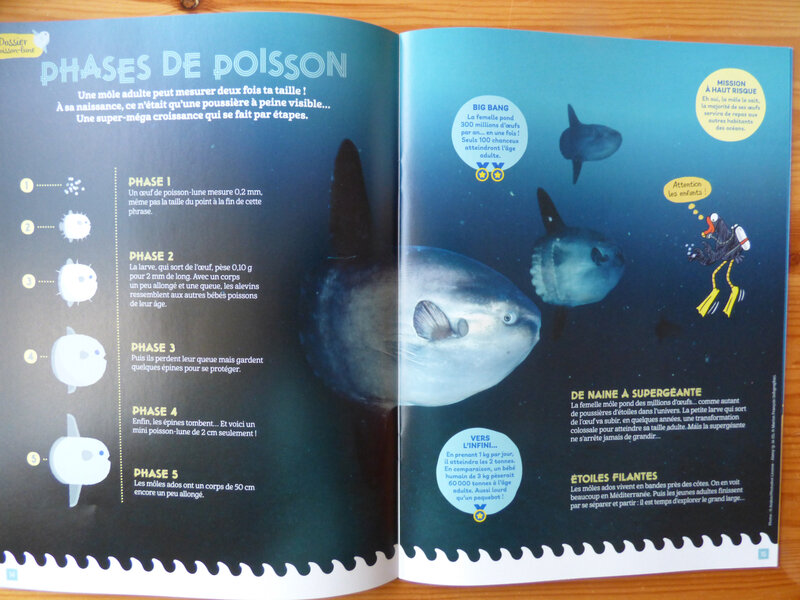 Salamandre Junior Poisson lune (2)