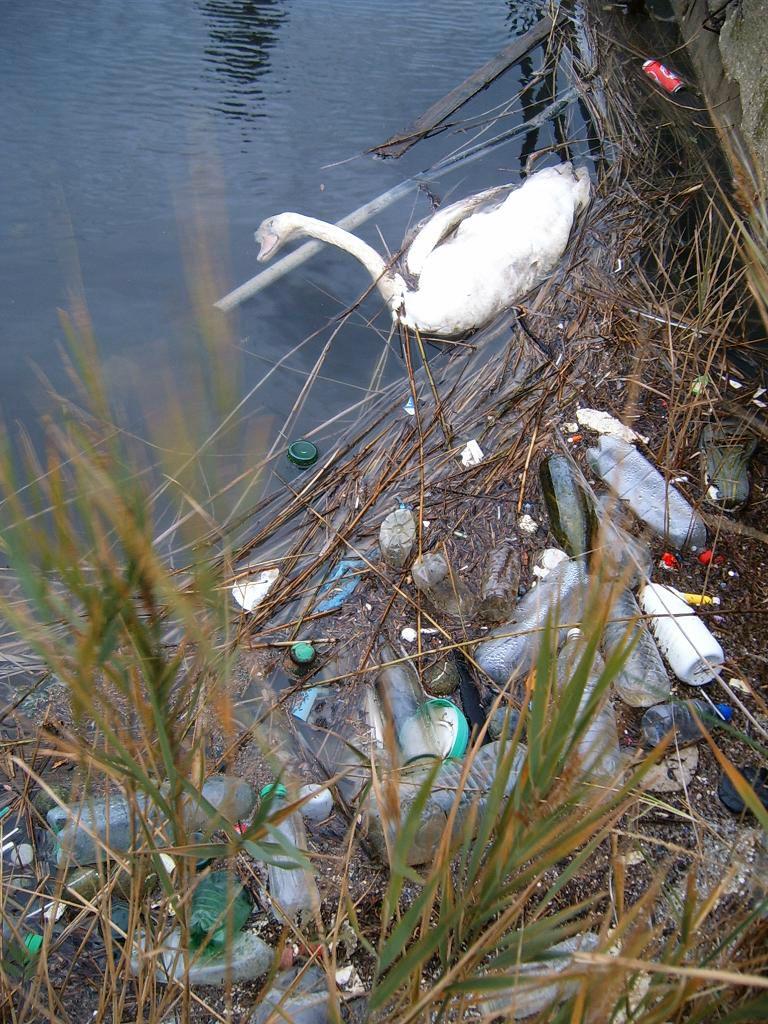 Etang de Berre Déchets et cygne mort - Déchets plastiques - Pollution détritus