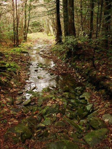 2008 04 08 Un chemin, un ruisseau