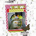 oiseau Zzal 17-12-14