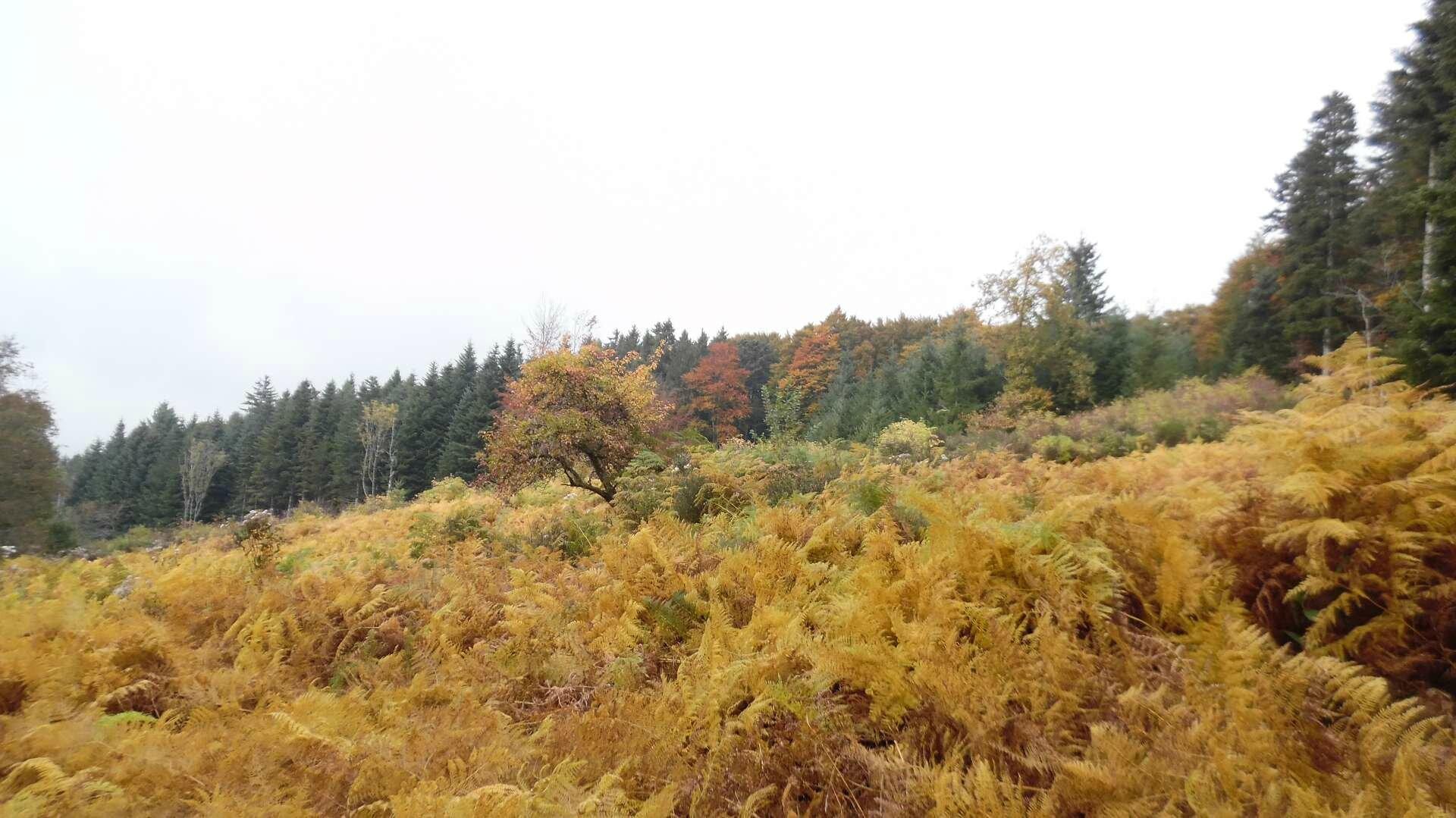 Randonnée du mardi 13 octobre après-midi - Plateau de la Verrerie.