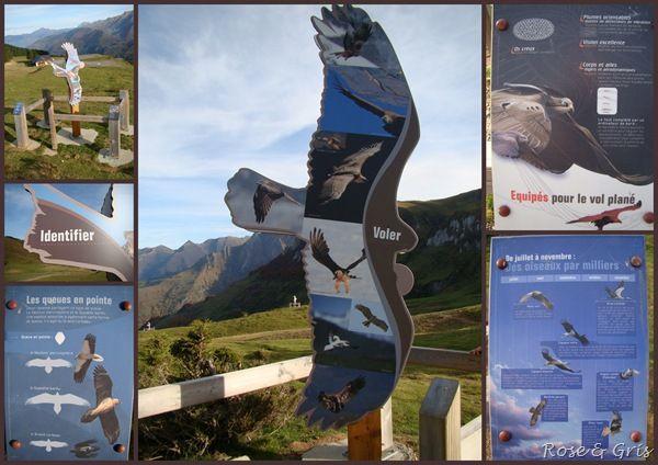 panneaux oiseaux