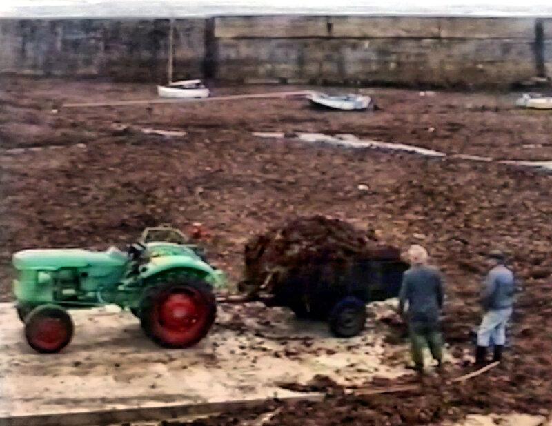 Ch37 - Ramassage du goémon au Loch en 1993