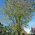 357 -la naissance d'un arbre