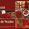 Les piments de venise scrapbooking scrap digital