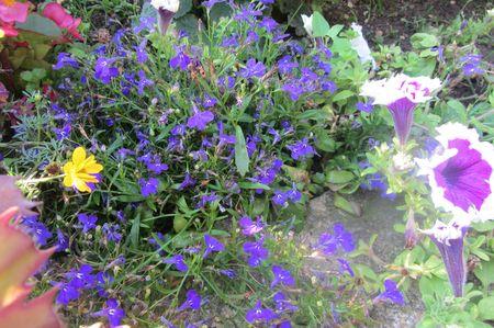 Fleurs Aout 2013 006