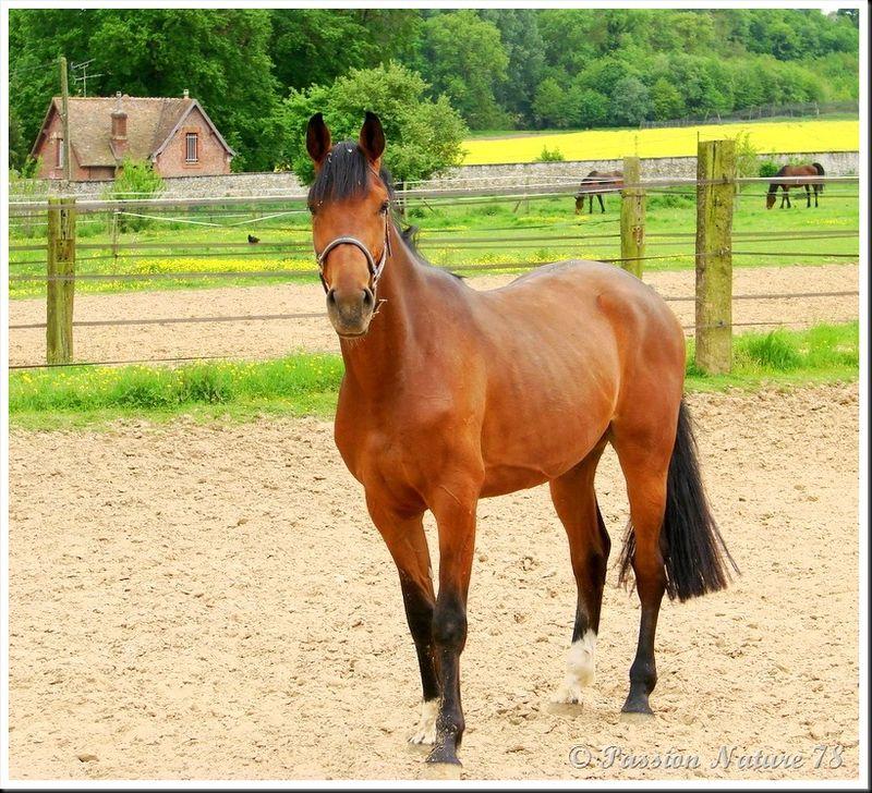 Le 78 département du cheval (12)