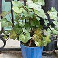Les plantes de la cour en juin - côté immeuble
