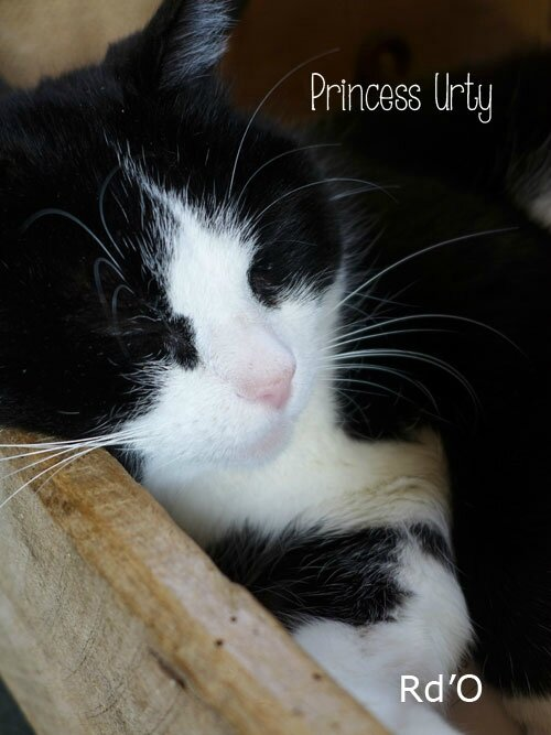 animaux-home-blog-03