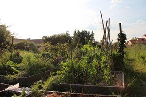 jardinIMG_8280