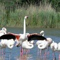 Flamants roses 10
