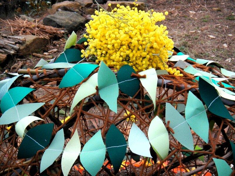 mimosa mandala 9
