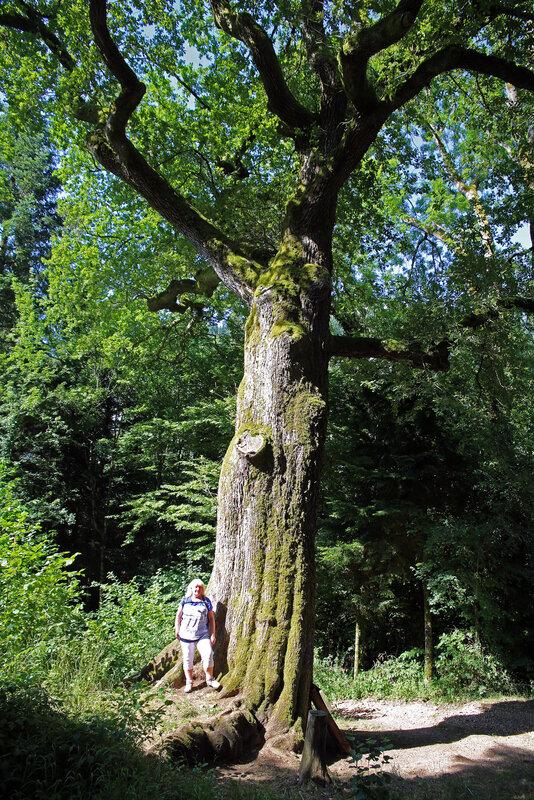 9N3A3547 le gros chêne source du Lison