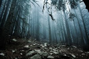 beautiful-fog-forest-mist-photo-Favim