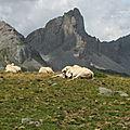 Lescun, vaches et montagnes au lac d'Ansabère (64)