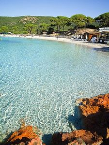 plage_palombaggia_pins