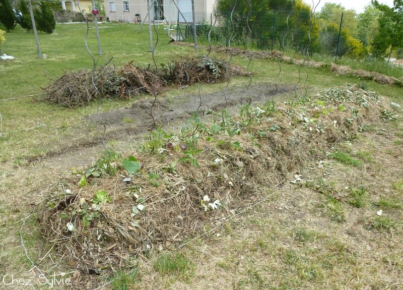 Potager permaculture plantations 01