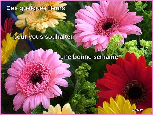 0 b sem fleurs gerbérasBPat19