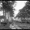 Ancien chemin de Labouheyre à Commensacq