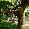 arbre éléphant