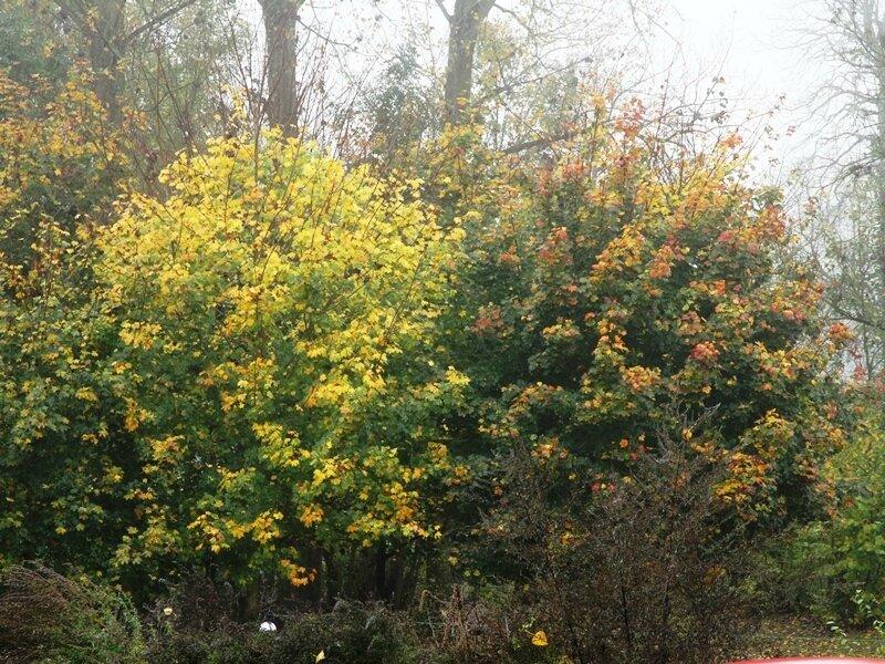 couleurs d automne sur les arbres d en face
