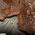 Fondant chocolat tonka