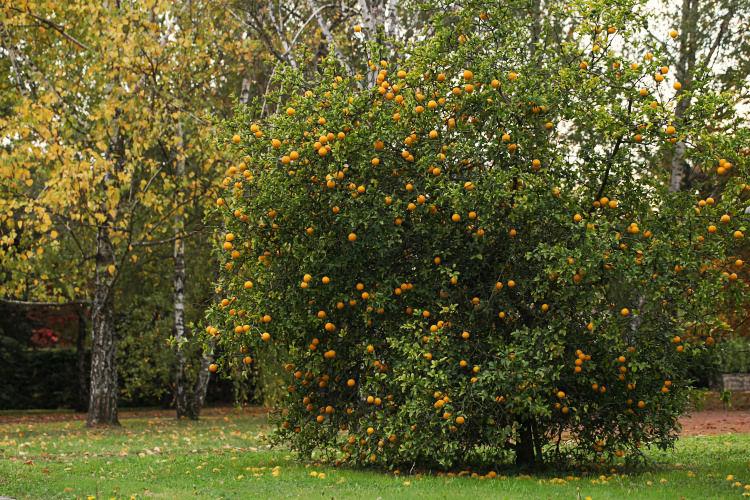 Oranger_10_22_10_2056